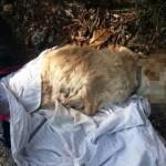 carcassa di cane