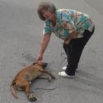 cane randagio morto con signora